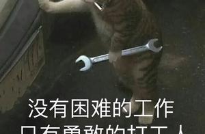 猫猫都被迫营业,火遍全网的打工语录把我笑傻了