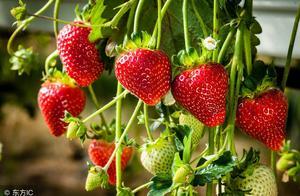 """草莓、蓝莓、树莓之间,除了都带个""""莓""""字外,还有啥关系?"""