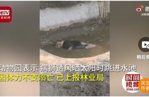 动物园狮子泡水池死亡 有没有人在管这些动物的死活