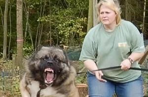 据说狗狗生气是这个样子,有被笑到...