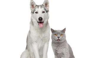 养1条宠物猫狗,会缓解人们的压力和寂寞吗?