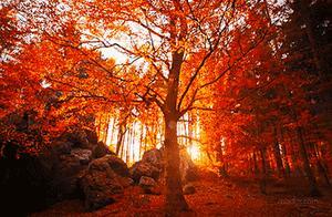 成都绝美赏秋路线,让人流连忘返