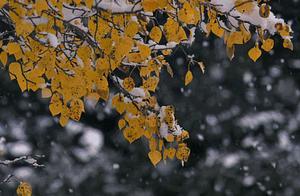 小雪:花雪随风不厌看,更多还肯失林峦