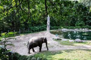 世界最孤独大象独自生活13年,美国近80万人请求还它自由