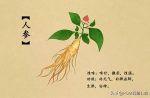 春暖花开,送上手绘中草药图谱~