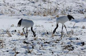 """中俄界湖迎万只""""北迁""""候鸟群 比往年早一周"""