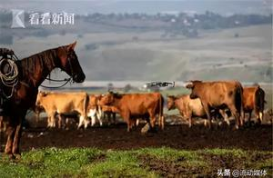 1:1000!以色列用无人机放牛丨趣观世界