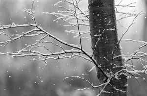 这些诗词不带一个雪字,却写尽雪之美