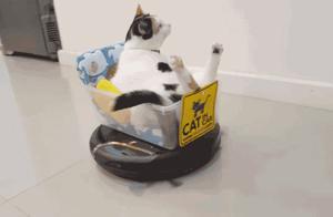 网友被扫地机器人整无语了,会跟猫打架,还动不动离家出走怎么破