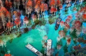 金秋皖南摄影线处处是美景,看那绝美红杉林,色彩斑斓美如油画