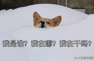 家里养柯基的,下雪天就不要遛狗了…
