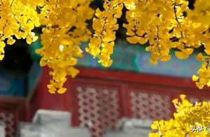 故宫的秋:京城最后一抹金色,愿人世间的美好与你同在