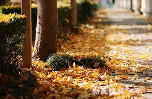 """上海落叶不扫开始啦!说不扫却在捡 这些""""落叶设计师""""拼了"""