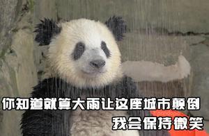 大熊猫的头套质量有多好?防咬防拽还防水