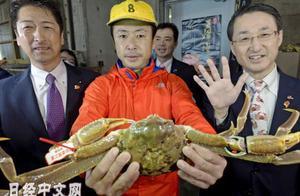 """32万人民币!日本""""五辉星""""螃蟹拍出全球最高价"""