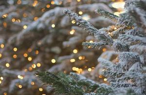 圣诞节最受欢迎的2种食物,既经典又营养,很多人可能没听说过