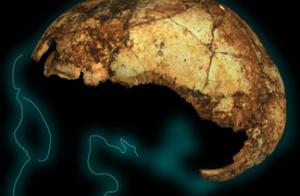 南非发现了200万年前的直立人头骨,人类历史会因此而改变吗?