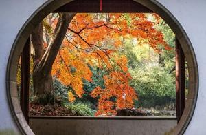 秋天的一张照片,醉人的秋景,大西北的豪放,江南的婉约