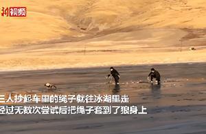 青海乡干部跳冰湖救落水野狼
