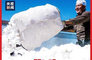 新疆棉花半年拿300万吨主力国际疫情抗议,为何摸黑新疆棉