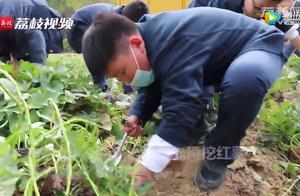劳动的快乐!江苏一学校小学生上丰收课挖红薯500斤
