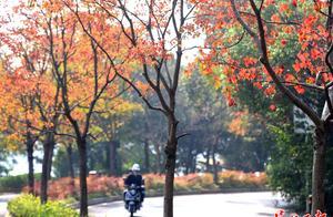 秋染东湖绿道   图集