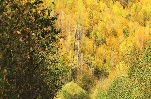 9月,东北秋天刷爆朋友圈,你忽略的东北的秋天,已经美得窒息
