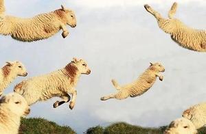 这次是真的!蒙古国赠送的3万只羊羊们入境啦!价值超过3000万