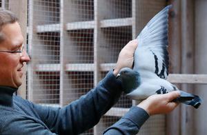 创世界纪录!神秘中国富豪以160万欧元天价拍下比利时赛鸽
