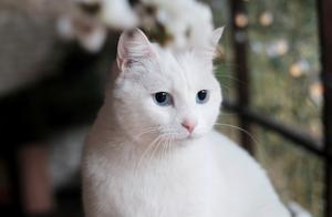 日本和美国研究称,猫的毛色会影响性格?真科学还是博眼球?