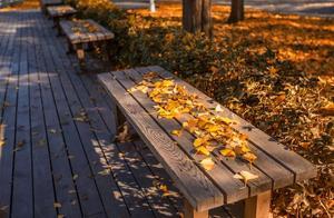 上海42条景观道开始落叶不扫,最美秋色在落叶大道等你