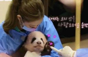 BP摊上事了?Jennie违规带妆抱熊猫幼崽,韩国综艺再触线