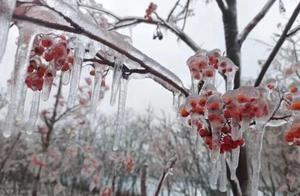 大学生在校内被狂风暴雪吹着走,网友:感受到了珠峰的气候