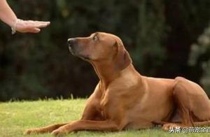 """想拥有""""别人家""""的狗子吗?那么这些训练狗子的方法,你必须了解"""