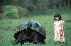 就像是孤独的乔治,这个物种仅剩两头,还都是母的,是人类的杰作