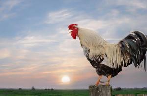 农民模仿《咏鹅》写一首《咏鸡》,获国家级文学奖,仅有18个字