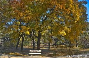 每年秋天北京人必做的事,没跑
