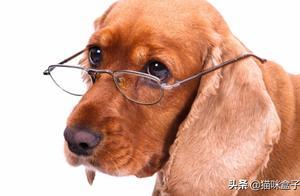 虽然是同一个世界,狗子眼中的世界却与你看到的相差万里