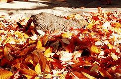别总去黄山了,这才是安徽人12月最值得去的8个秋景地