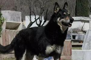 主人意外去世,忠犬在墓地旁一呆就是11年,它终于和主人团聚了