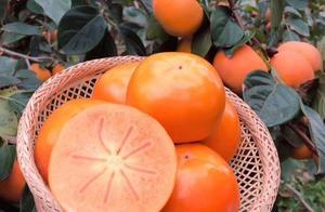 甜脆柿——冬季吃货们必吃的水果之一