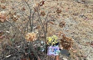 被虐待致死的韩国16个月大幼童墓地:空空荡荡只有一个相框