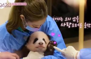 韩国女艺人违规接触熊猫幼崽,家中有饲养宠物,粉丝却还在维护