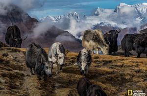 我们为什么渴望旅行?18张绝美风景照告诉你答案