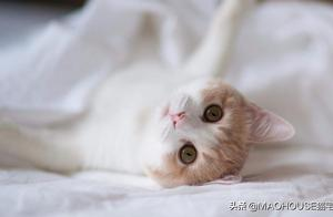 如何让断奶后的小猫自己学会进食?