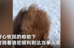 内蒙古一牧区积雪厚度达30厘米 法官骑骆驼上门办案