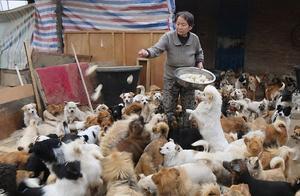 重庆68岁老人收养1300多只流浪动物:花光积蓄卖了房,只为心中的那一点善良