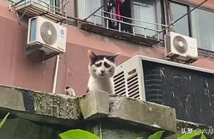 """上海一只流浪猫,因为""""奇特的脸""""瞬间爆红,这脸网友看了笑岔气"""