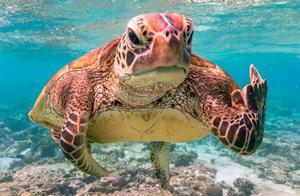 2020搞笑野生动物摄影奖入围出炉!海龟比中指、鱼儿错愕歪嘴