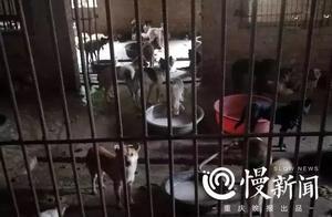 女子寻走失爱犬,发现四川简阳无证屠狗场!警方:目前3人被刑拘